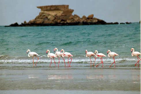قشم؛ جزیره دلفین ها