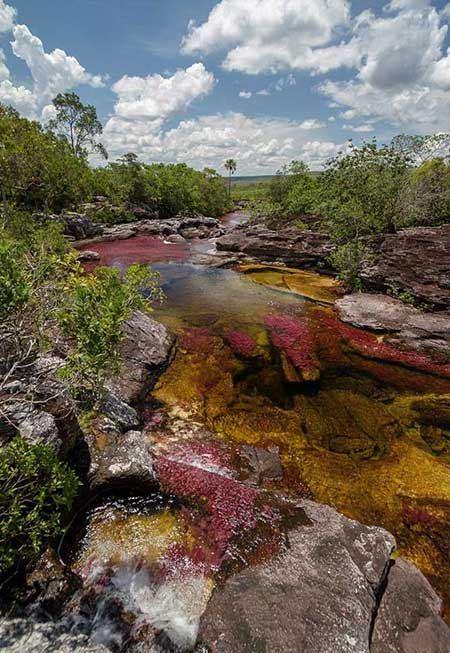 رودخانه کانو کریستالز در کلمبیا + تصاویر