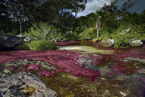 عکسهای طبیعت از زیباترین رودخانه دنیا در کلمبیا