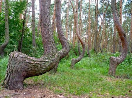 جنگل, جنگلهای عجیب, عجایب طبیعت