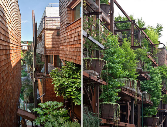 منزلی که از 150 درخت ساخته شد