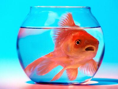 نحوه نگهداری ماهی قرمز عید
