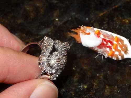 کاربرد خمیر دندان - تمیز کردن طلا و الماس
