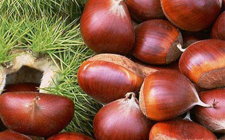خواص درمانی میوه بلوط