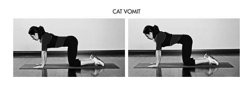 حرکت گربه - لاغری پهلو و شکم