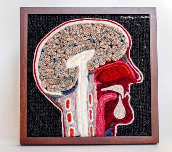تصاویر دیدنی عکس و کلیپ  , روشی هنرمندانه برای آموزش آناتومی