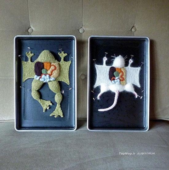 آموزش کالبدشناسی با بدن های بافته شده