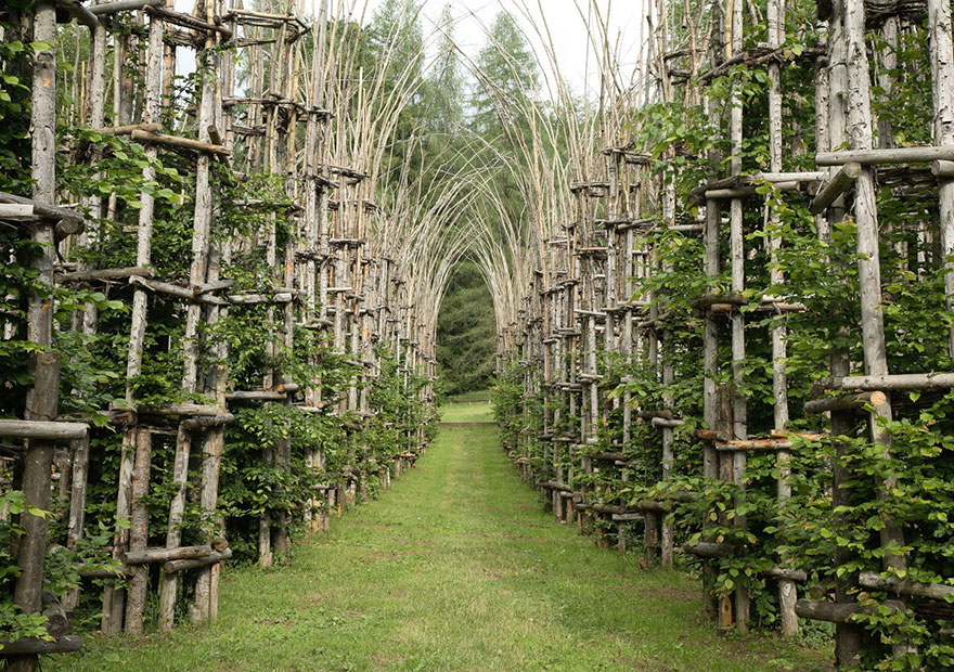کلیسای درختی یا کتدراله وِجیتاله - معماری طبیعی
