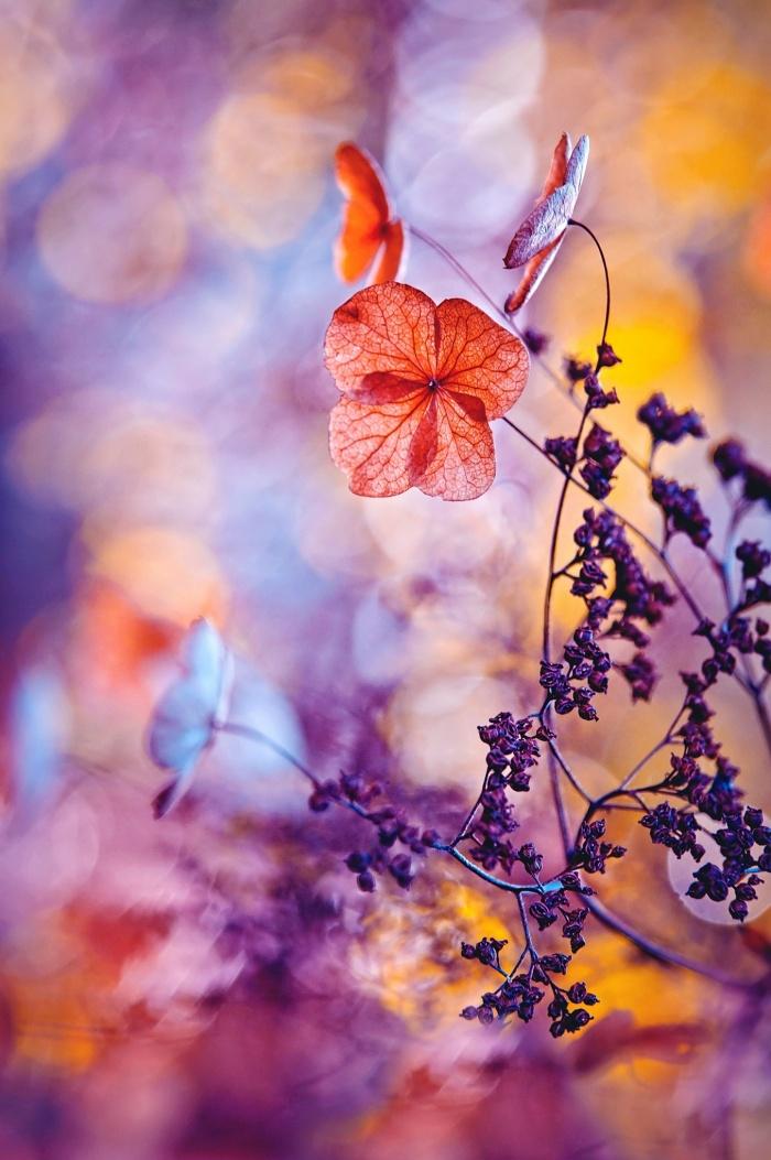 عکس برندگان مسابقه «عکاسی باغ» ۲۰۱۵ - عکاسی از طبیعت - عکس های زیبا از عکاسان