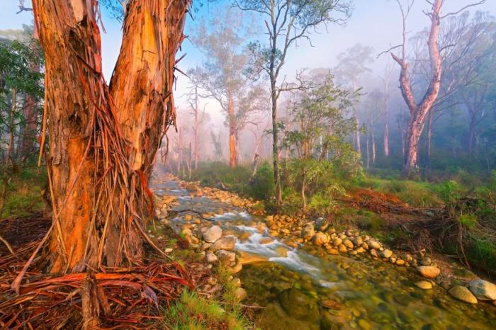 عکس برندگان مسابقه «عکاس باغ» ۲۰۱۵ - عکاسی از طبیعت - عکس های زیبا از عکاسان