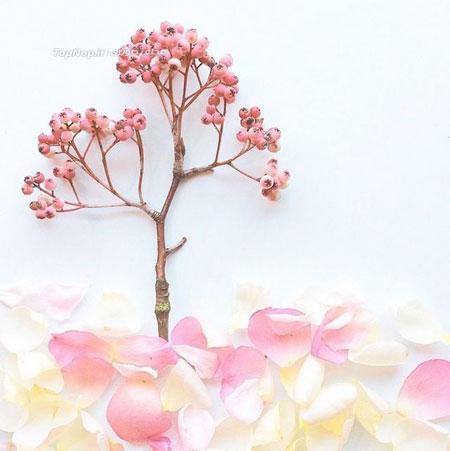 هنرنمایی با گلبرگ و برگ - نقاشی با گل ها و برگ ها - Flora Borager هنرنمایی با گلبرگ و برگ - نقاشی با گل ها و برگ ها - Flora Borager