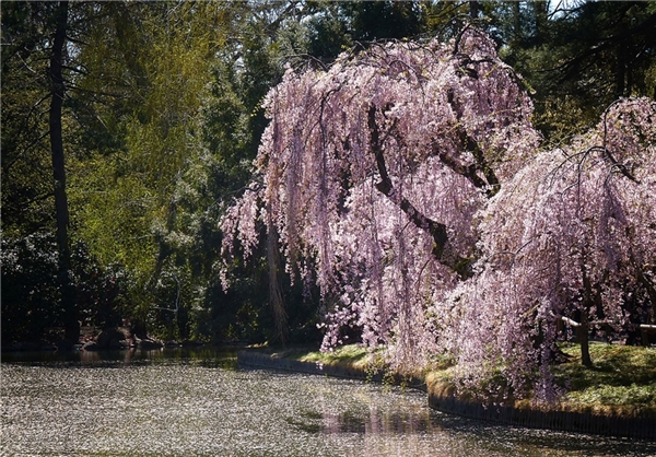 عکس منظره های زیبای بهاری - طبیعت در بهار - عکس های دیدنی و زیبا