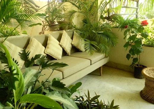 تزیین خانه با گیاهان آپارتمانی