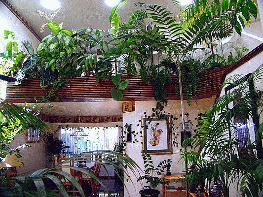 تزیین خانه با گل و گیاه , زیباسازی محیط منزل با گلدان