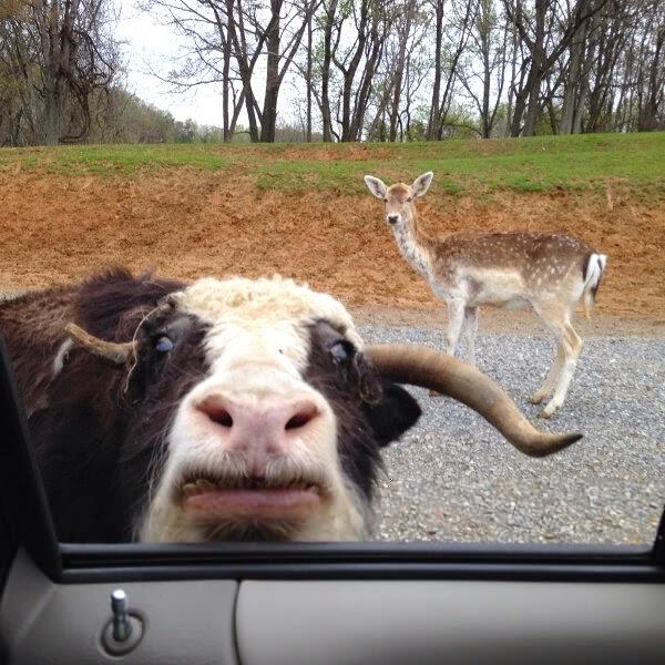 لحظه های دیدنی از حیوانات - شکار لحظه های جالب