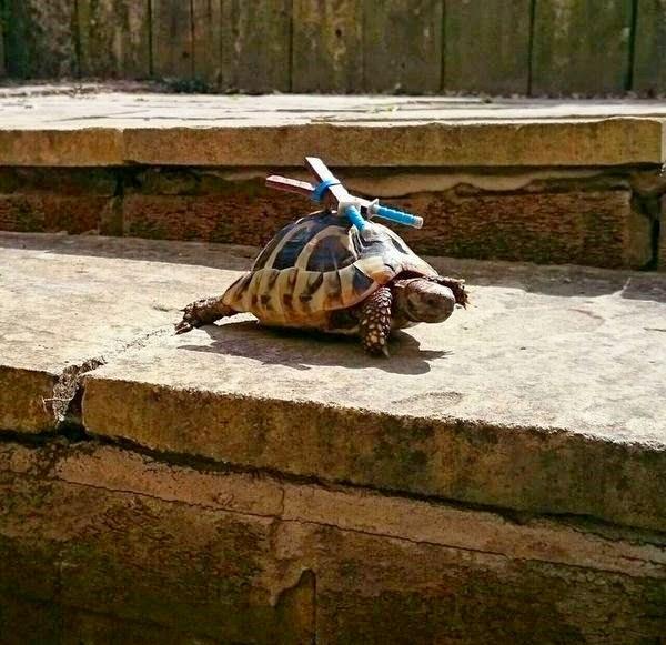 عکس های بامزه و دیدنی از حیوانات - شکار لحظه ها