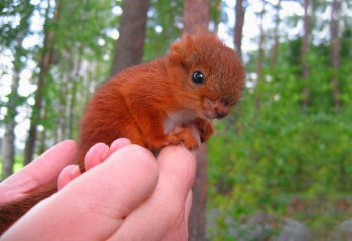 عکس های دیدنی و جالب از حیوانات - شکار لحظه ها