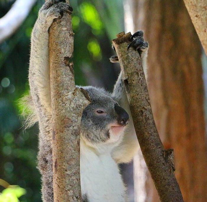 تصاویر جالب حیوانات - عکس های خنده دار