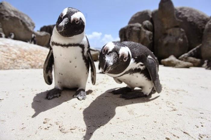 تصاویر جالب حیوانات - عکس های بامزه و خنده دار
