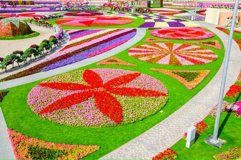 Dubai-Miracle-Garden-201