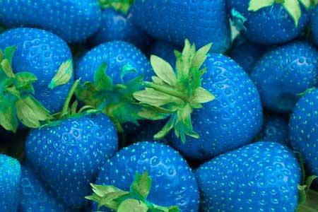خوراکی های رنگ آبی - مواد غذایی - دانستنیهای علمی - بیشتر بدانید علمی