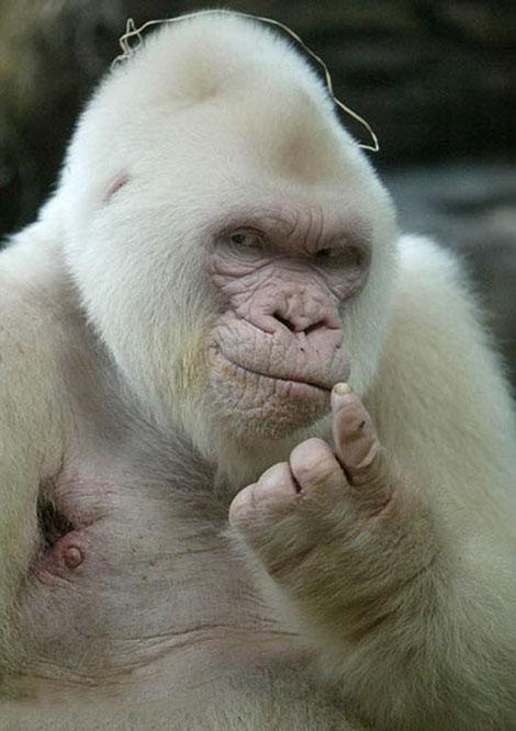 عکس های دیدنی - ژست های تماشایی حیوانات بامزه