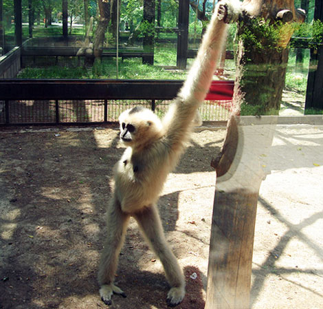 ژست های جالب و دیدنی حیوانات جلوی دوربین