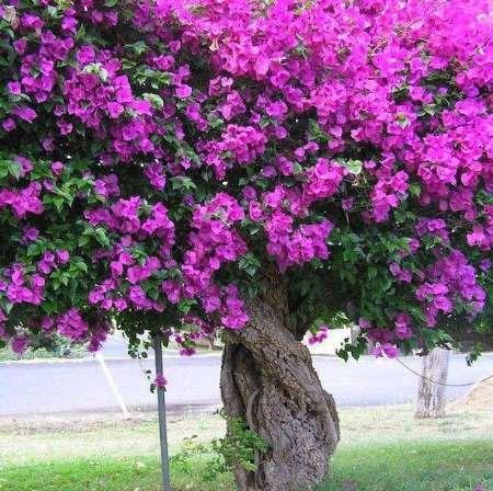 عجیب ترین درختان جهان