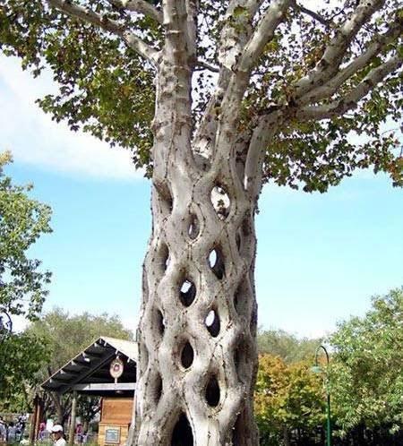درختان عجیب و غریب دنیا