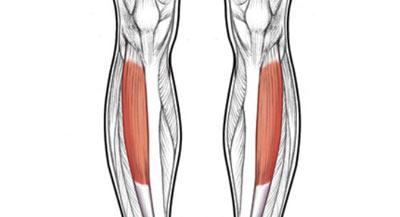 حفظ تناسب اندام با این حرکات ورزشی, ورزش, تقویت عضلات پائین تنه, ورزش, تقویت عضلات پائین تنه
