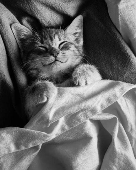 ژست های جالب و تماشایی و لبخند زیبای گربه ها