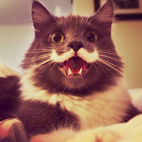 smiling-cat-34__300