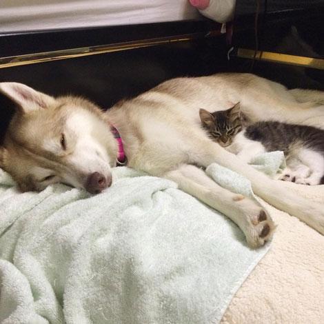 نجات یافتن بچه گربه در حال مرگ توسط سگ