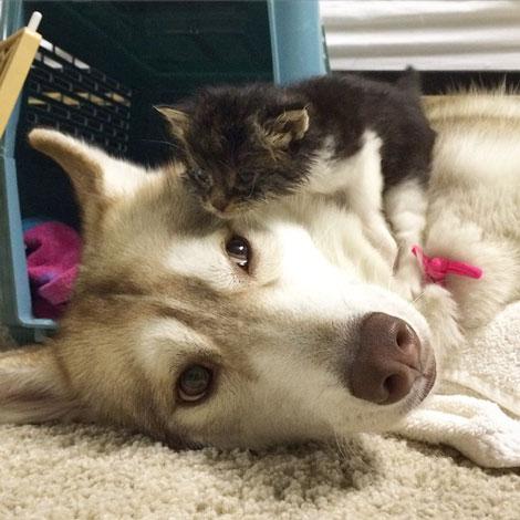 نجات جان بچه گربه توسط سگ