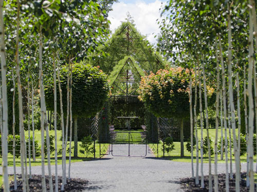 tree-church-nature-installation-barry-cox-new-zealand-6