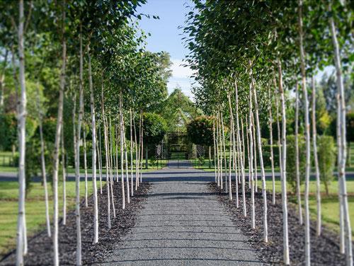 tree-church-nature-installation-barry-cox-new-zealand-2