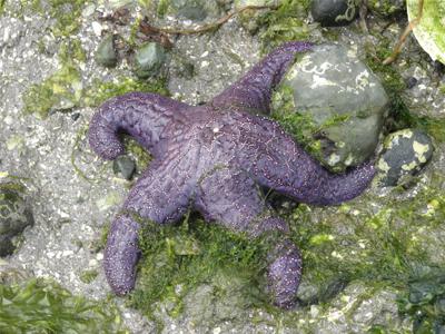 دانستنی های جالب درباره ستاره های دریایی