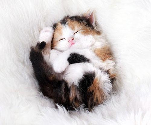 بچه گربه های دوست داشتنی در خواب