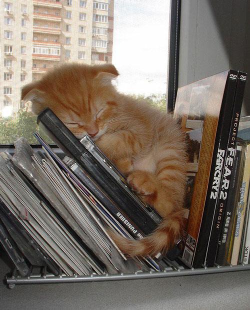 sleeping-kitties-29__605