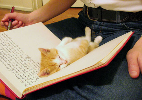 عکس گربه های ملوس - بچه گربه - گربه ها در خواب