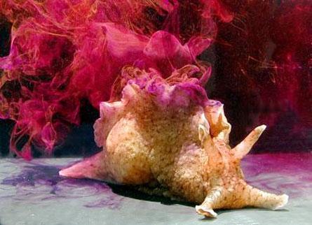 راز سم رنگی خرگوش دریایی کشف شد