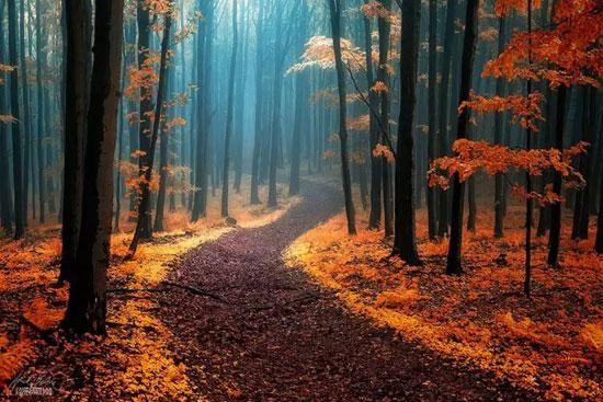 جنگل های زیبا و شگفت انگیز جهان