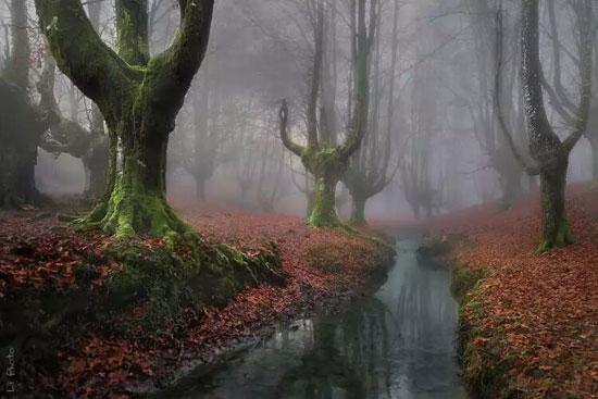 جنگل های مرموز و شگفت انگیز جهان