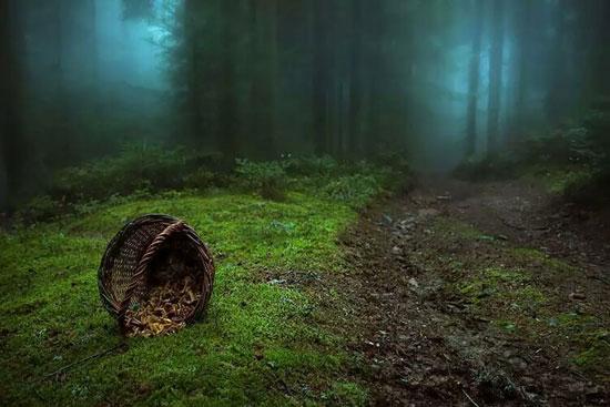 ١۵ جنگل مرموز و شگفت انگیز دنیا