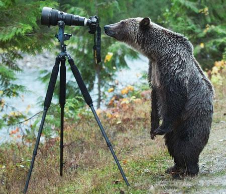 حیواناتی که می خواهند عکاس شوند