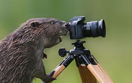 عکاسی از حیات وحش