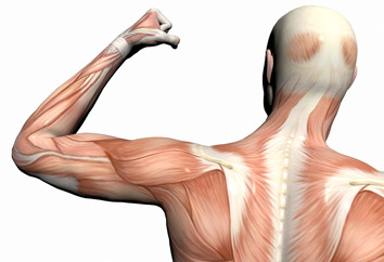 حرکات ورزشی برای تقویت عضلات بازو