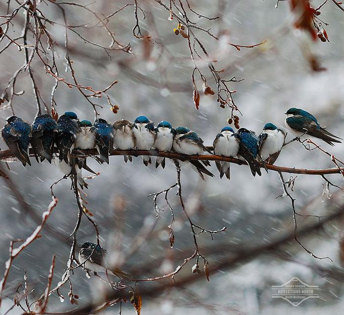 پرنده های کوچک در آغوش هم , پرنده ها در سرما