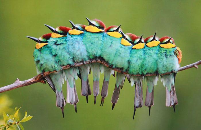 ترفند پرندگان زیبا برای گرم شدن در سرما