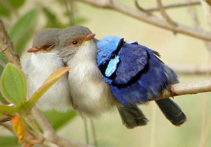 ترفند پرندگان زیبای کوچک برای گرم شدن در سرما